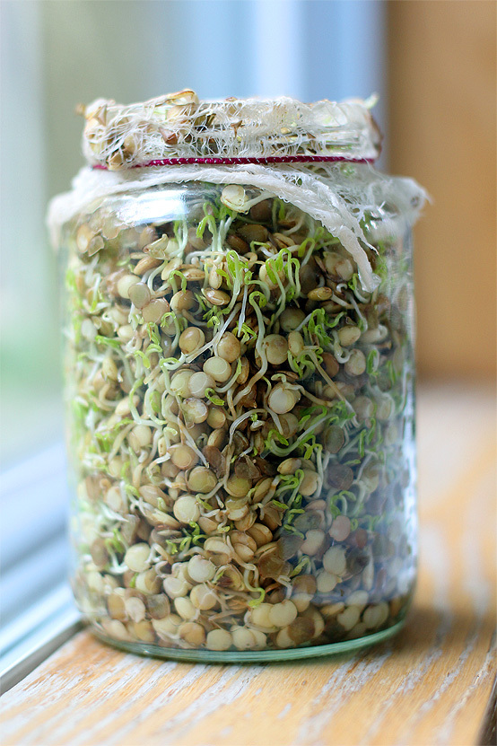 sprouted-lentils