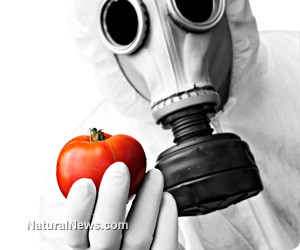 Science-GMO-Tomato-Gasmask