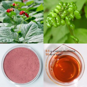 Panax-Ginseng-Berry-Extract-70-UV-