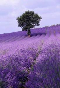 Пет неверојатни билки кои ќе ви ги смират нервите