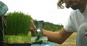 Докторите му дале 3 месеци живот – а тој го излечи ракот на желудник со пченична трева