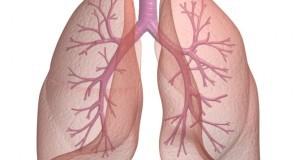 Kако да ги исчистите белите дробови од никотин