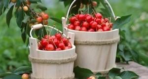 Ги фрламе а дршките од цреши лекуваат се