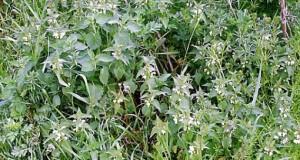 Овие билки помогаат за правилно функционирање на системот за варење