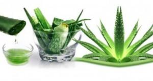 Рајско стапче: Растението кое лечи преку 50 болести и здравствени нарушувања