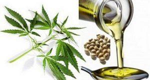 СЗО потврди дека медицинската мархиуана нема штетни последици