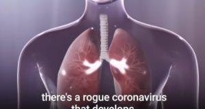 Што му прави коронавирусот на телото – орган по орган
